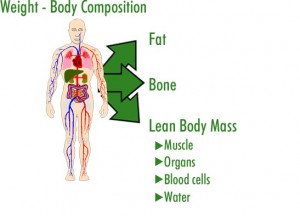 Is Your Body Composition Healthy?