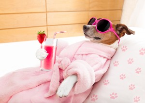relax spa wellness dog
